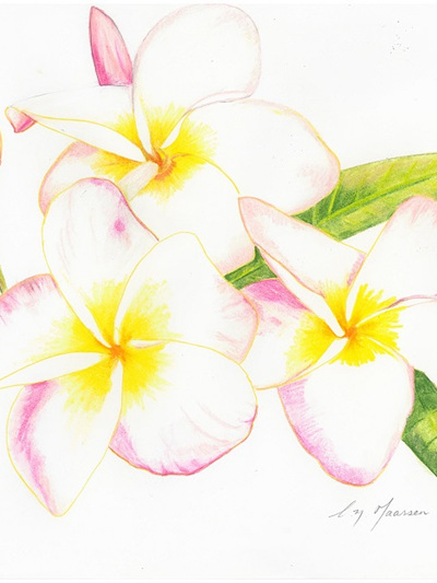 NZ Artist Blank Greeting Card Frangipani