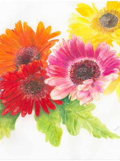 NZ Artist Blank Greeting Card Gerberas