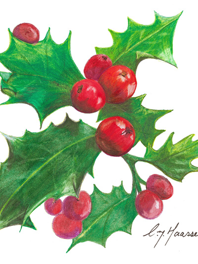 NZ Artist Blank Greeting Card Holly