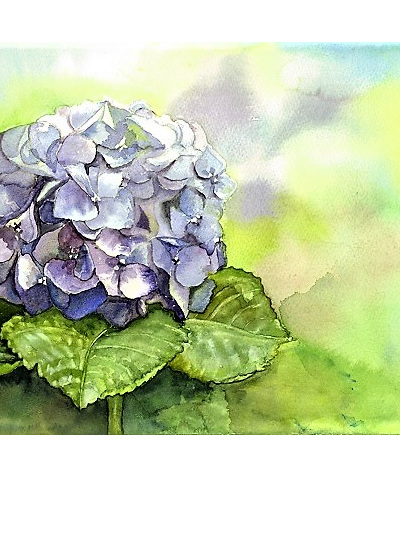 NZ Artist Blank Greeting Card Hydrangea