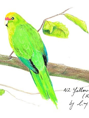 NZ Artist Blank Greeting Card Kakariki (New Zealand Parakeet)