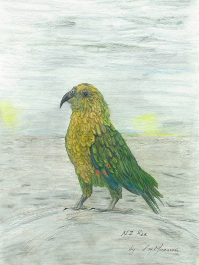NZ Artist Blank Greeting Card Kea