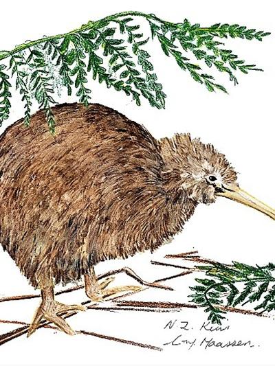 NZ Artist Blank Greeting Card Kiwi