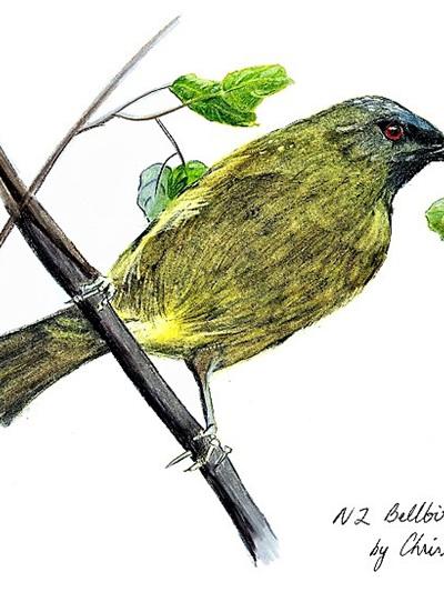 NZ Artist Blank Greeting Card Korimako (New Zealand Bellbird)