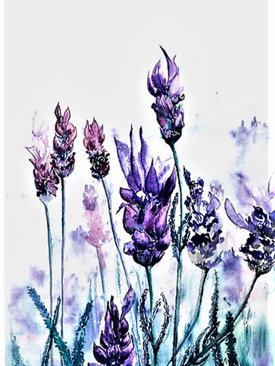 NZ Artist Blank Greeting Card Lavender