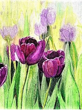 NZ Artist Blank Greeting Card Magenta Tulips
