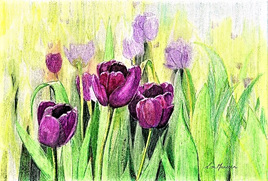 NZ Artist Blank Greeting Card Magenta Tulips