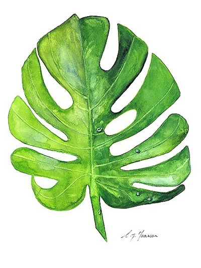 NZ Artist Blank Greeting Card Monstera Leaf