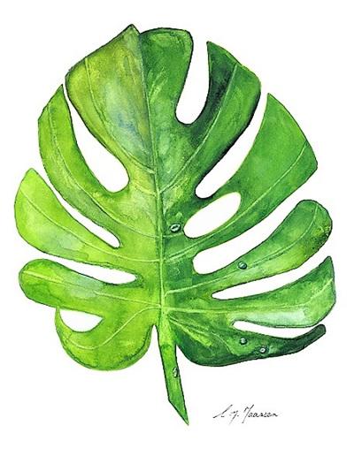 NZ Artist Blank Greeting Card Monstera Leaf