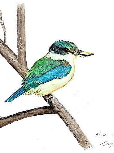 NZ Artist Blank Greeting Card New Zealand Kingfisher