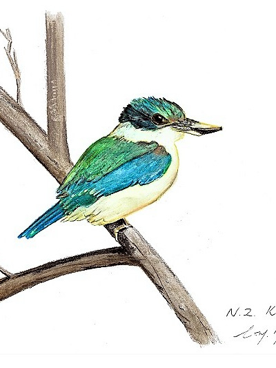 NZ Artist Blank Greeting Card New Zealand Kingfisher