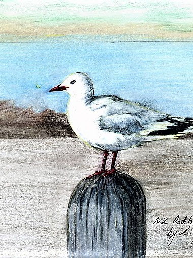 NZ Artist Blank Greeting Card New Zealand Red-Billed Gull