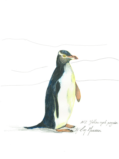 NZ Artist Blank Greeting Card New Zealand Yellow-Eyed Penguin