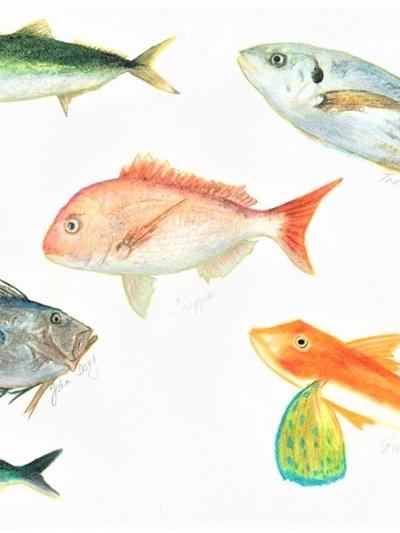NZ Artist Blank Greeting Card Northland Fish