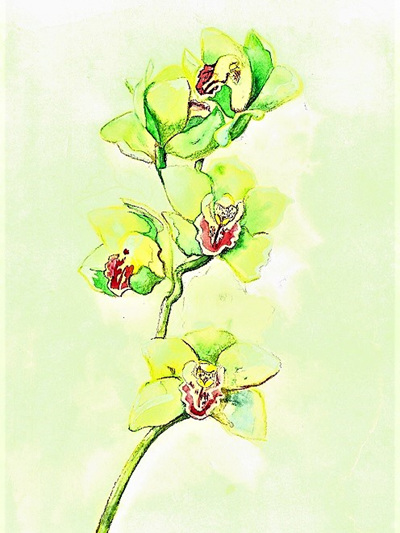 NZ Artist Blank Greeting Card Orchid