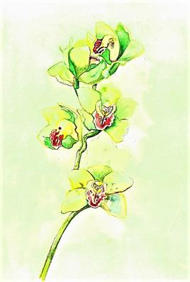 NZ Artist Blank Greeting Card Orchid