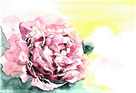 NZ Artist Blank Greeting Card Pink Peony