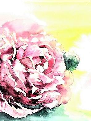 NZ Artist Blank Greeting Card Pink Peony