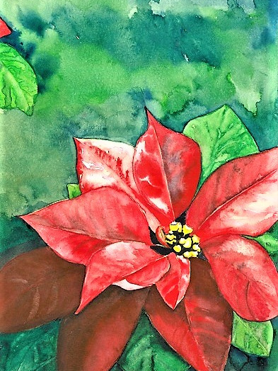 NZ Artist Blank Greeting Card Poinsettia