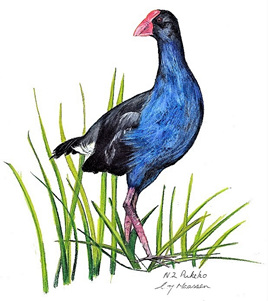 NZ Artist Blank Greeting Card Pukeko