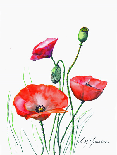 NZ Artist Blank Greeting Card Red Poppies