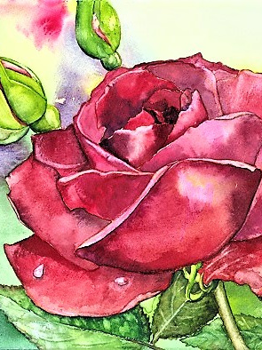 NZ Artist Blank Greeting Card Red Rose