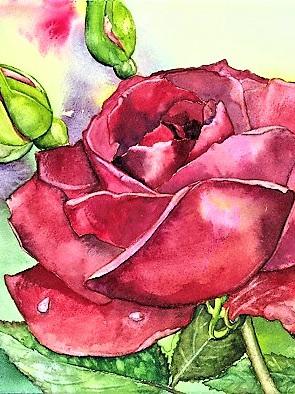 NZ Artist Blank Greeting Card Red Rose