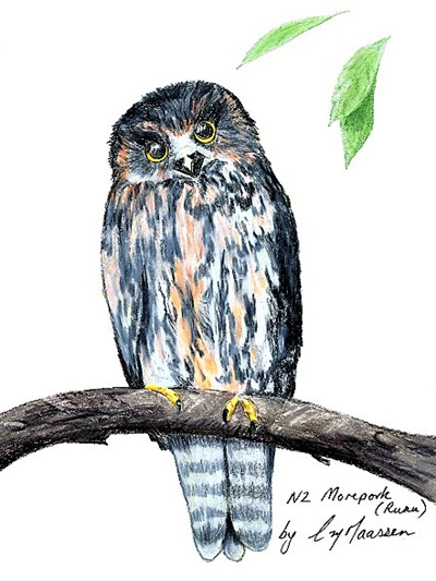 NZ Artist Blank Greeting Card Ruru (Morepork)