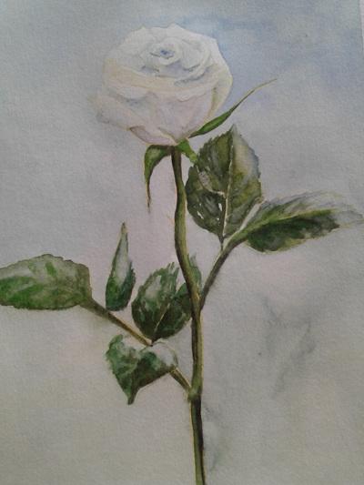 NZ Artist Blank Greeting Card Single White Rose: Blue Background