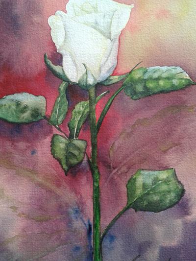 NZ Artist Blank Greeting Card Single White Rose: Purple Background