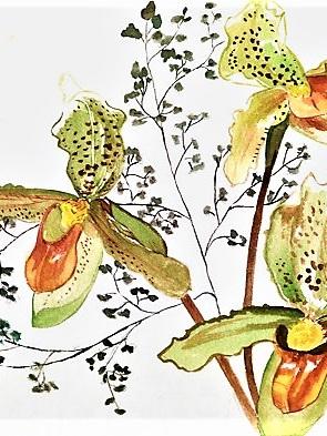 NZ Artist Blank Greeting Card Slipper Orchid