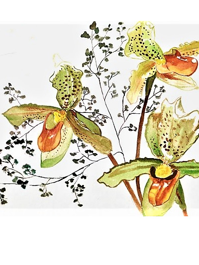 NZ Artist Blank Greeting Card Slipper Orchid