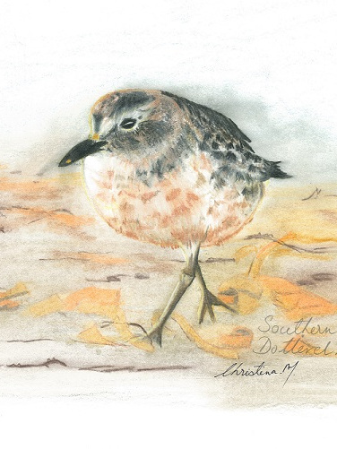 NZ Artist Blank Greeting Card Southern New Zealand Dotteral