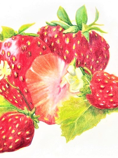 NZ Artist Blank Greeting Card Strawberries