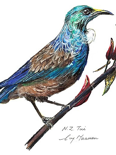 NZ Artist Blank Greeting Card Tui