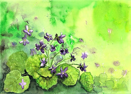 NZ Artist Blank Greeting Card Violets