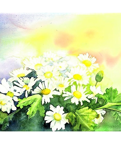 NZ Artist Blank Greeting Card White Daisies