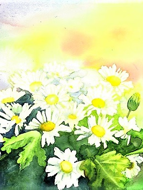 NZ Artist Blank Greeting Card White Daisies