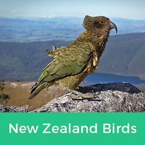 NZ Birds Collection