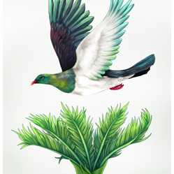 NZ In Flight Wood Pigeon - Card
