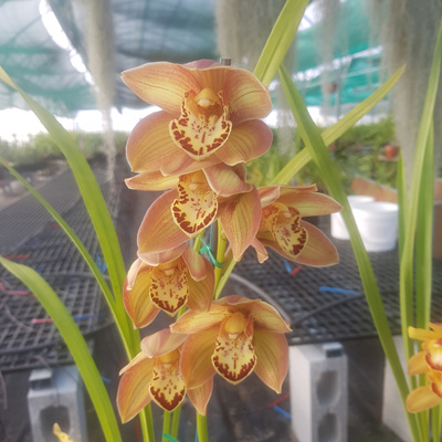 On Sale Orchids
