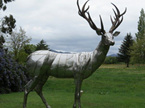 """On Watch"" Stag 1"