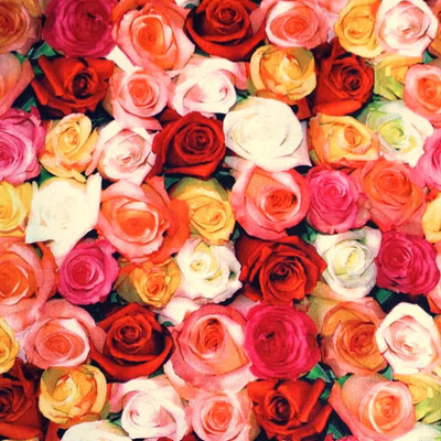 One Of A Kind - Roses