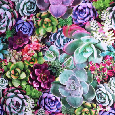 One Of A Kind - Succulents