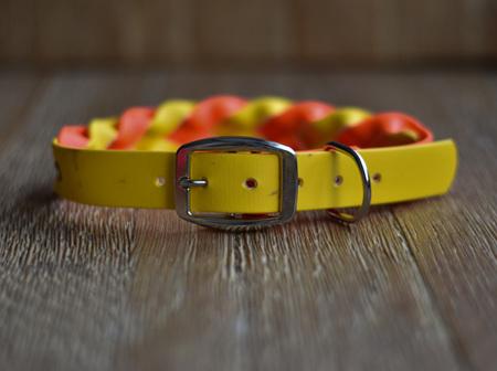 OneOff - Yellow and Fluro Orange Collar