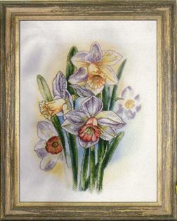 OR8101   Favourite Daffodills