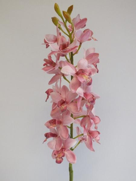 Orchid cymbidium pink 4433
