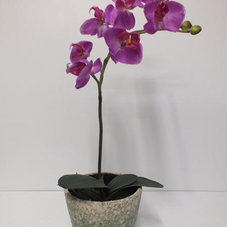 Orchid in San Reno pot 2317