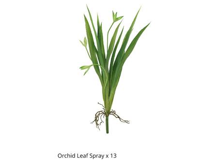 Orchid Leaf Spray x13 34cm MidGreen