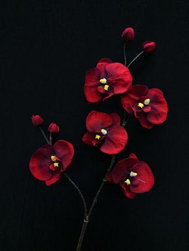 Orchid Phalaenopsis Deep Red 4167